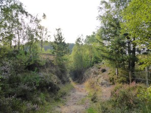 Near Gorse Covert, Cannock Chase