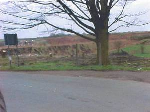 8 April 2001, the tree was in the garden of Jasmine garden and I think the only tree still left standing today