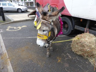 Zack the donkey was a lovely chap.