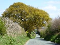 Gravelly Lane, Stonnall
