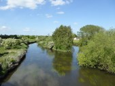 No longer a dirty old river - the Trent at Armitage.