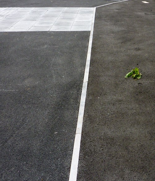 Nice bit of blacktop, not laid so well. I'm no botanist, but it looks like a weed to me...
