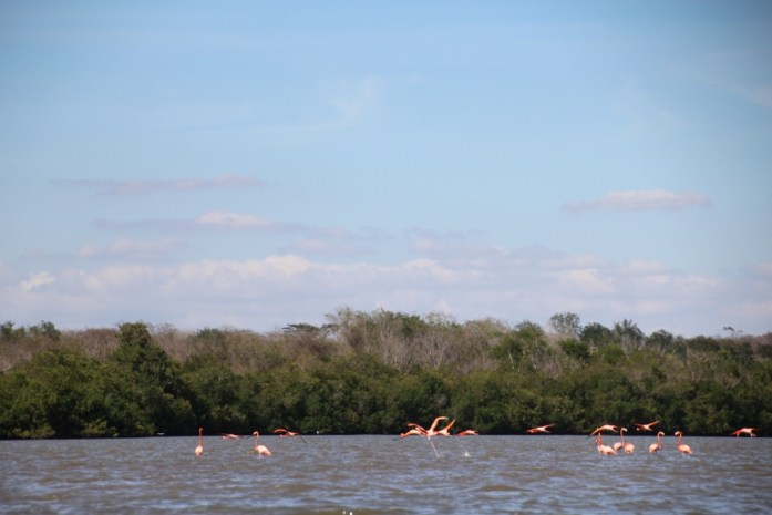Colony of Flamingos