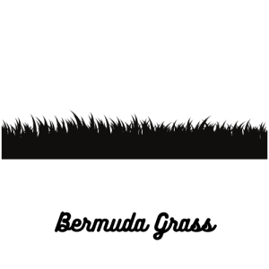 Bermuda Grasses