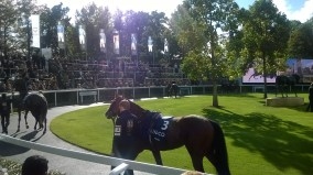 Growl in the Parade Ring