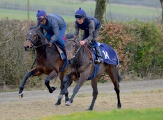 Maxios Colt and Ventura Magic on the gallops