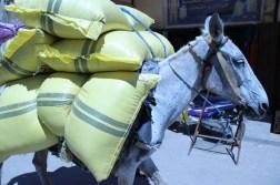 The ubiquitous mule