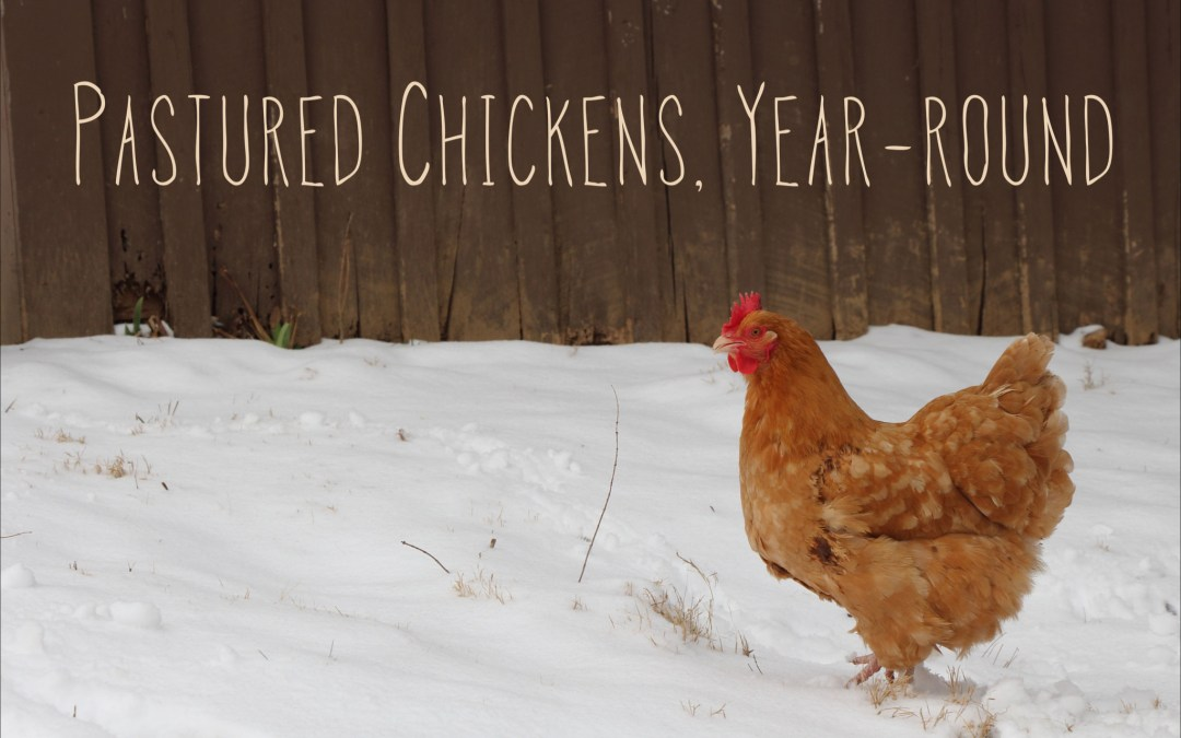 Pastured chickens, year-round