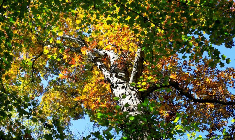 2017 Fall Tree Walk