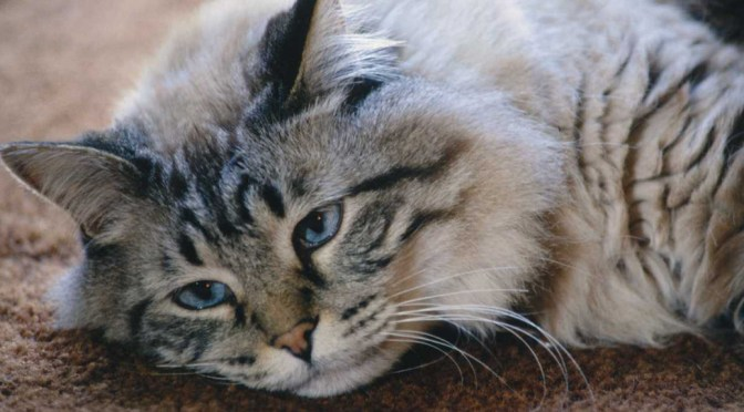 Behavior Issues for Cats