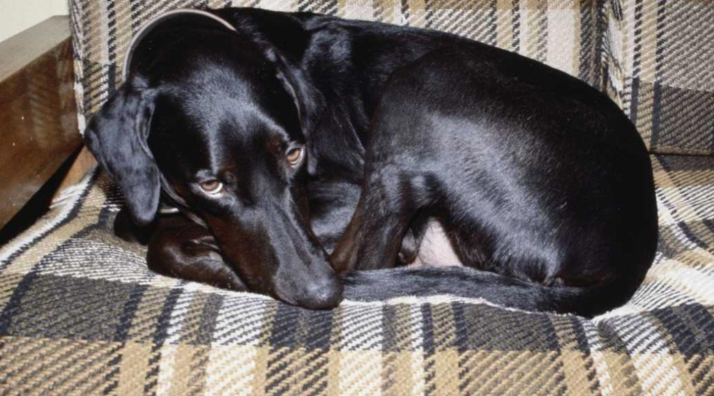 Dog curled up on a sofa
