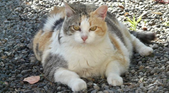 New Year's Resolutions for Overweight Pets