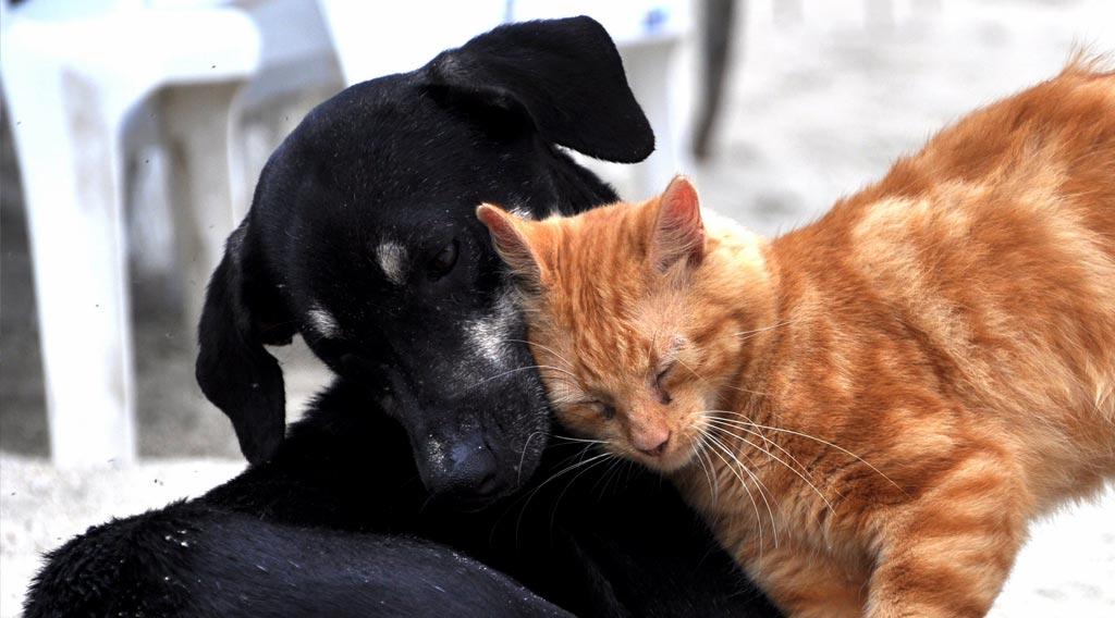 Black dog and orange cat snuggling together