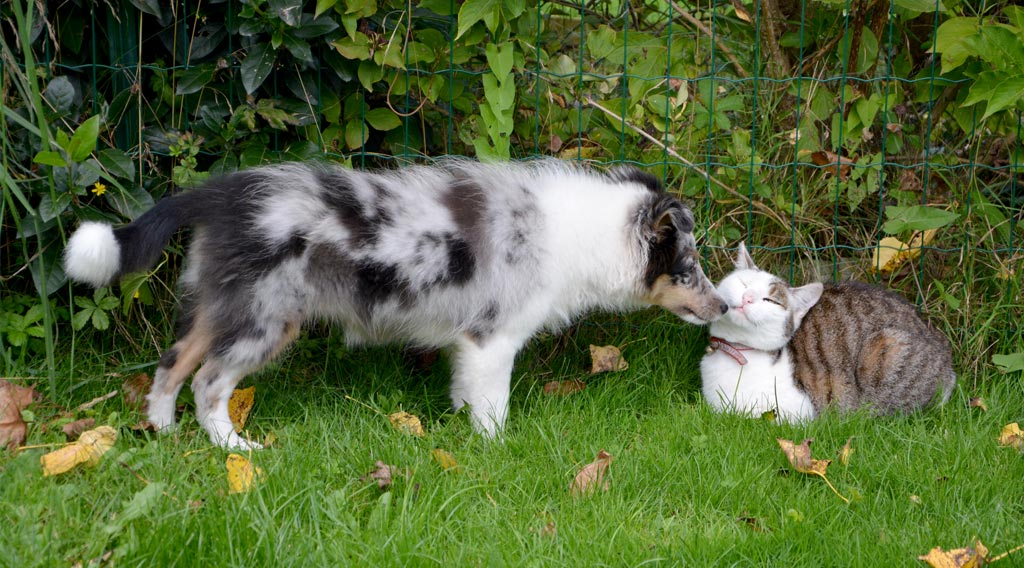 Dog sniffing reclining cat's face