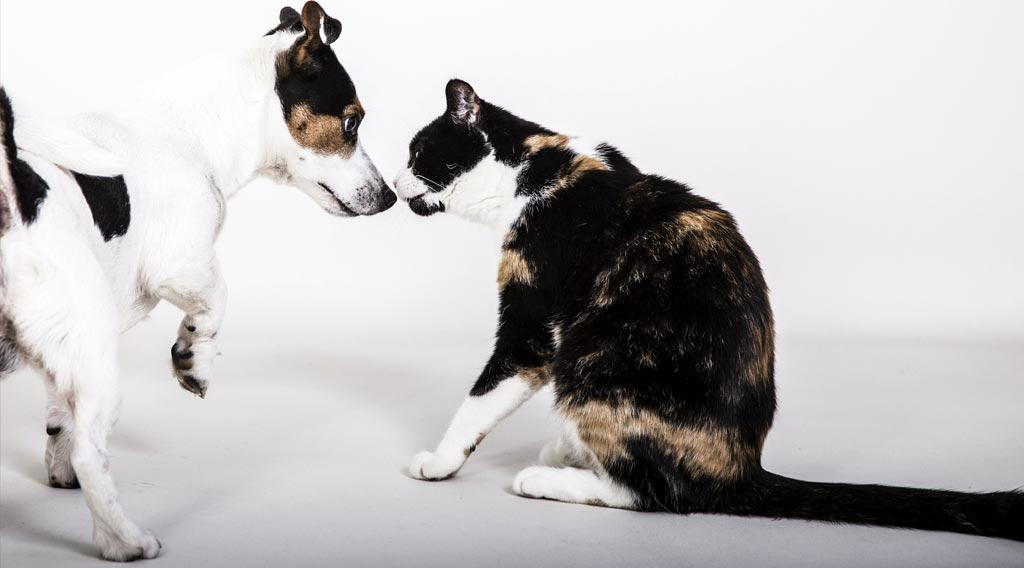 Terrier nose-to-nose with cat