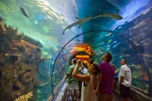 Shark Reef, Mandalay Bay, Las Vegas