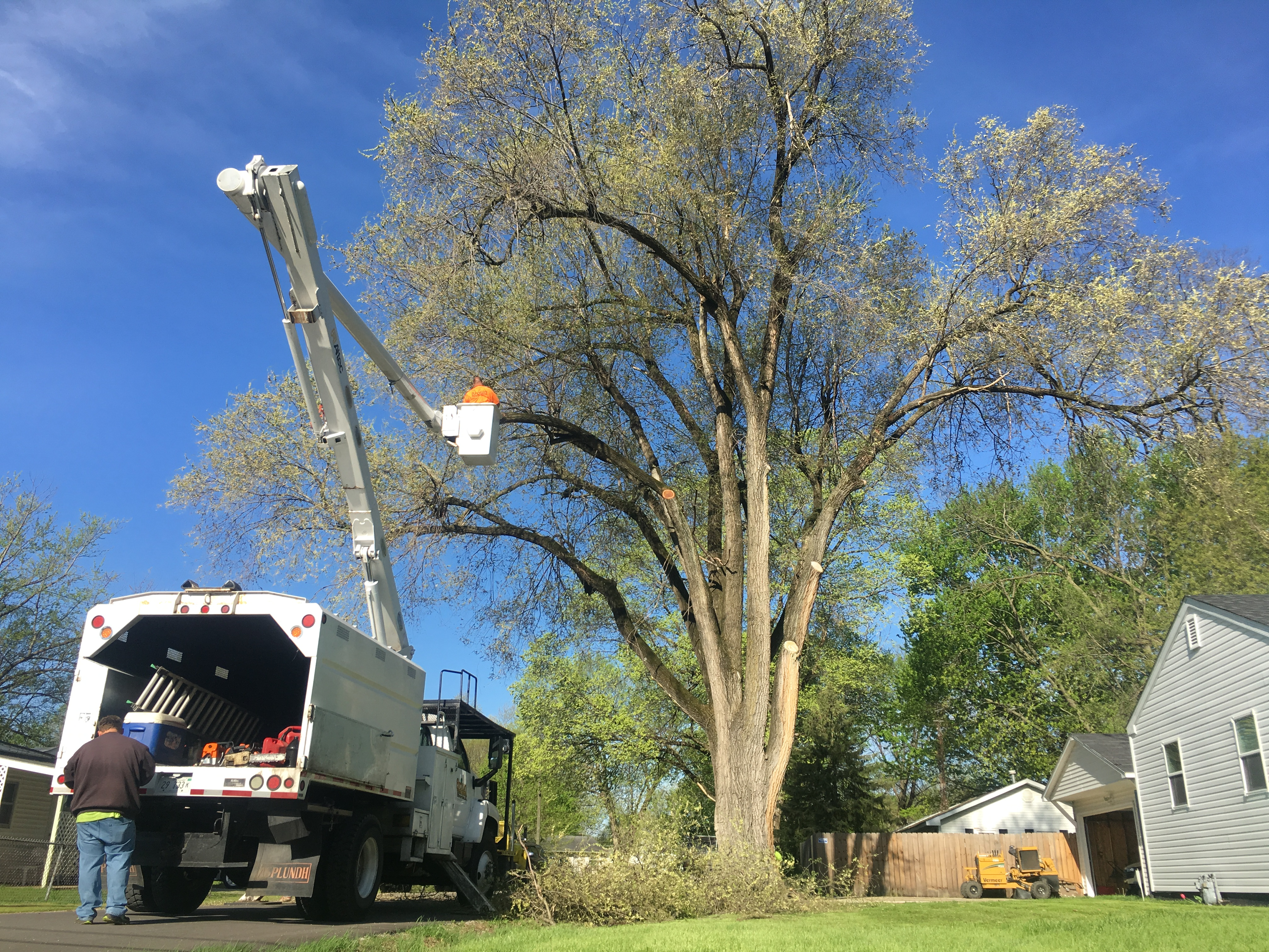 Tree Service Project Gallery | Brown Storm Service