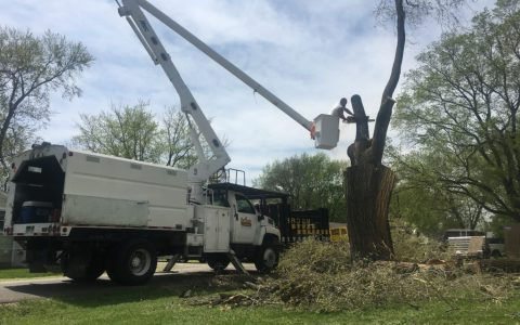Tree Removal Springfield IL 2 | Brown Storm Service