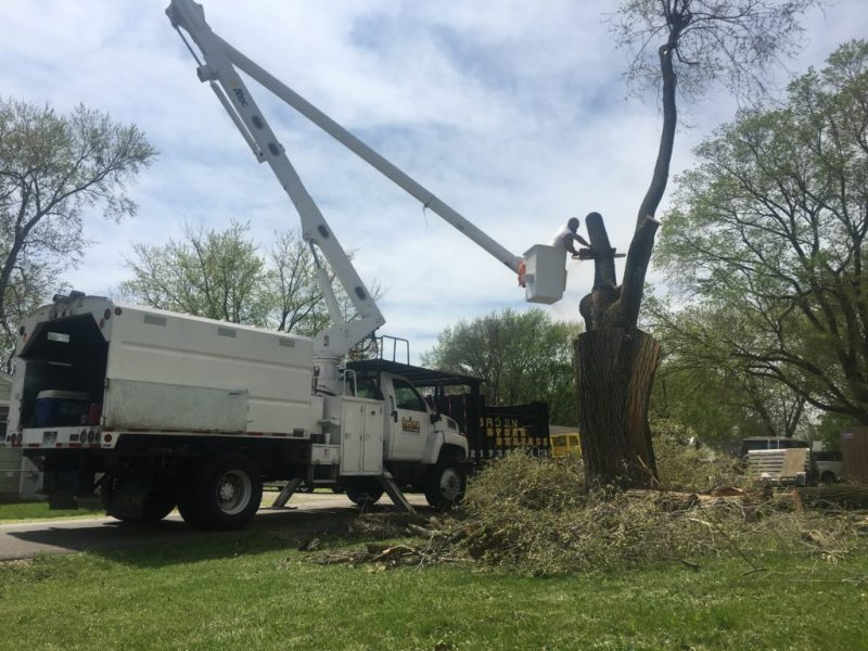 Expert Tree Removal | Springfield IL | Brown Storm Service