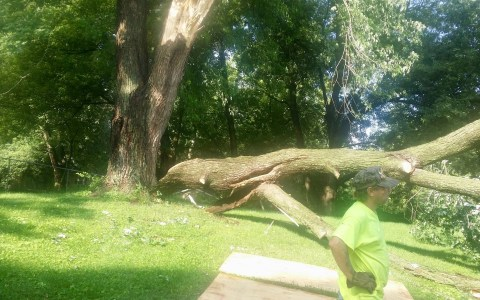 Tree Service Springfield IL 10 | Brown Storm Service