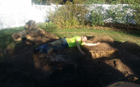 Tree Stump Grinding & Removal Springfield IL 5 | Brown Storm Service