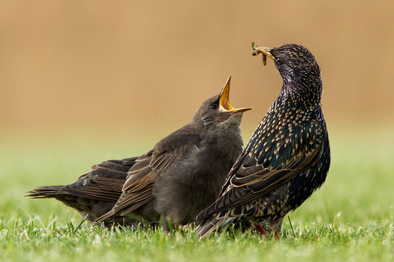 Feed Me, Nature Photography