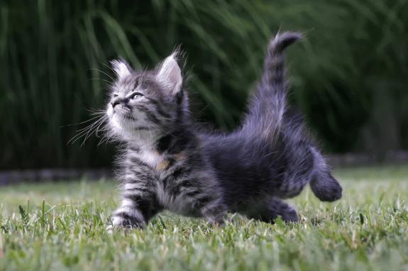 cat cute pictures