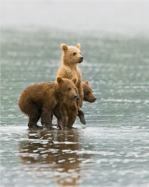 photography of animals