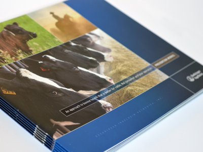 Corporate and Professional Brochures Design