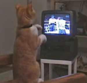 テレビのボクシングを見て猫パンチで真似をする猫