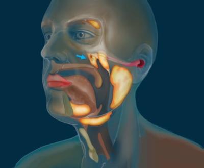 人体には未知の臓器があった