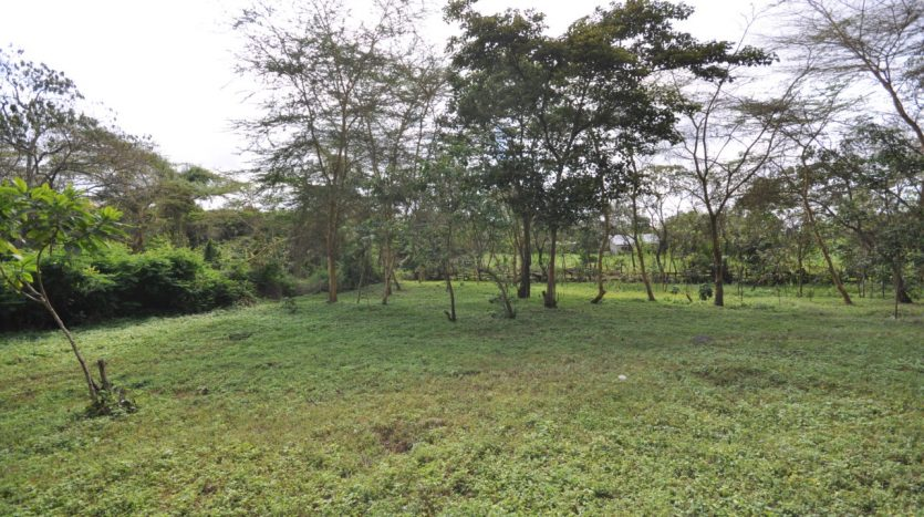 House With 7.5 Acres Border Arusha Nationak Park for Sale4