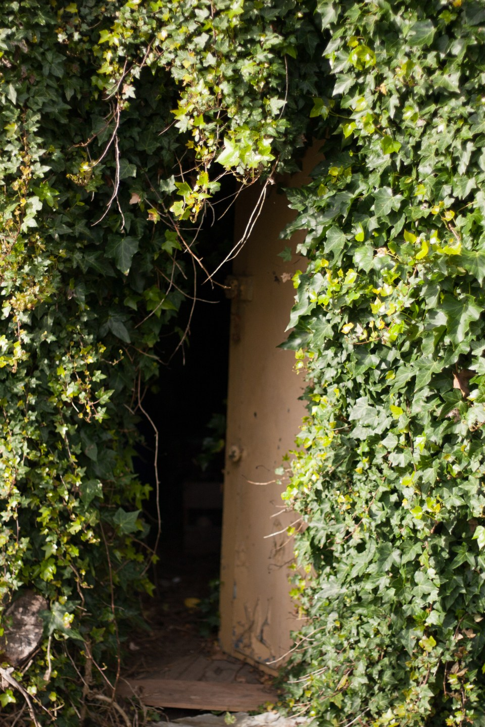 an overgrown shed with door partly open