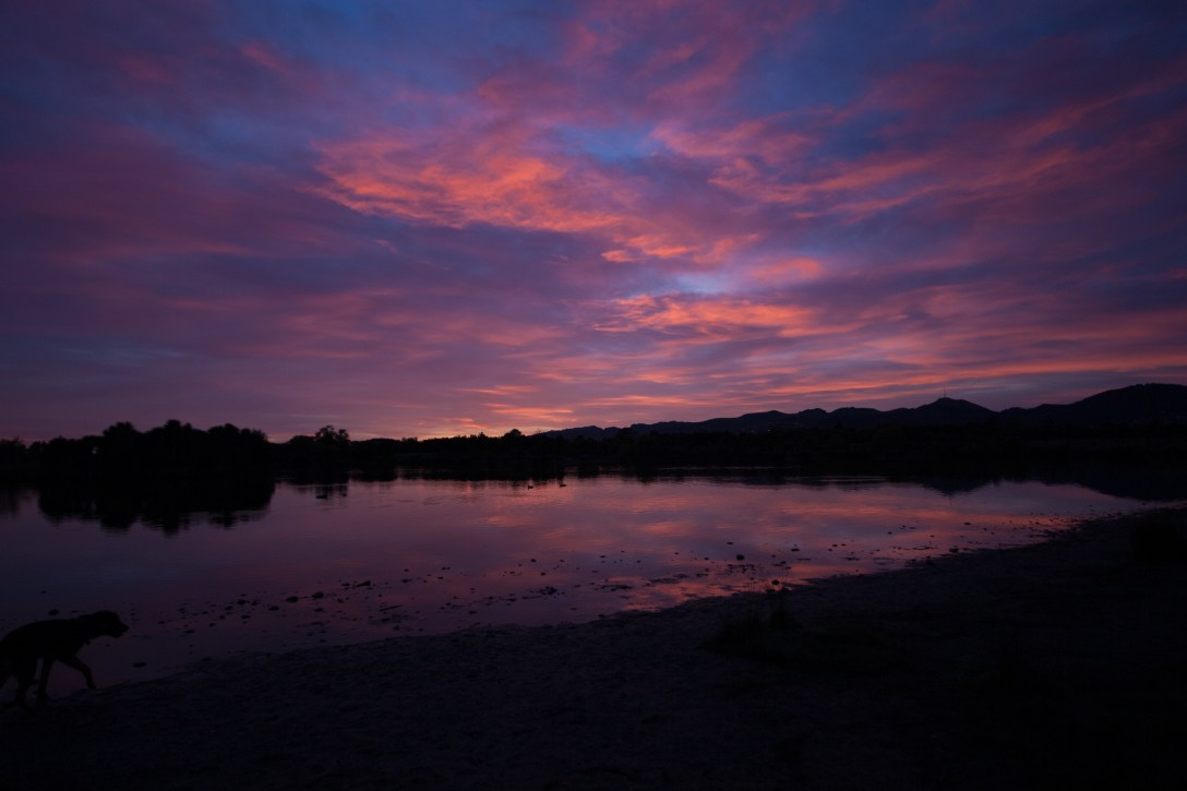 pink and purple sunrise over a lake with a dog barely visible bottom left hand corner
