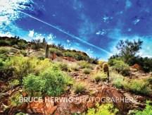 Arizona Desertscape2