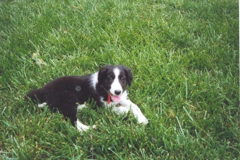 Tigger as a puppy