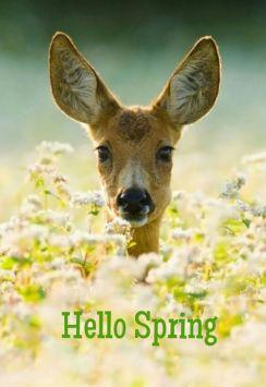 spring hello deer