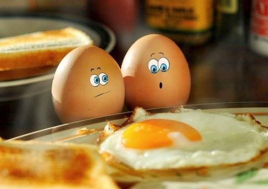 oh no eggs