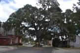 treeintheroadbybrucestambaugh