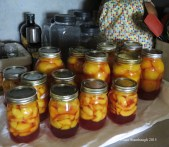 canned peachers