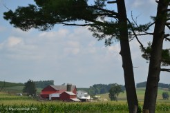 Amish farmscape