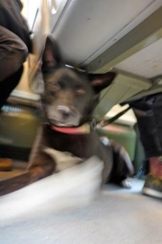 Streetcar Dog