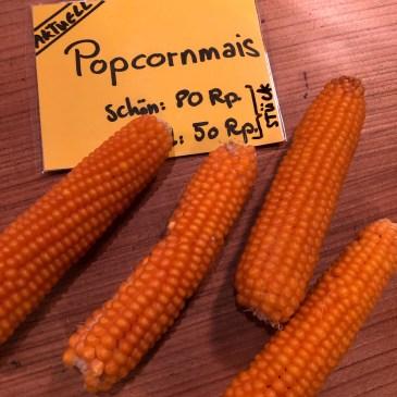 Aktuell: Popcorn-Mais mit Rezept