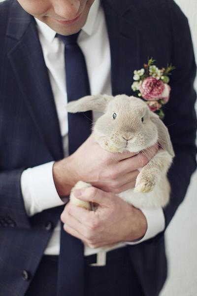 Dieren op bruiloft