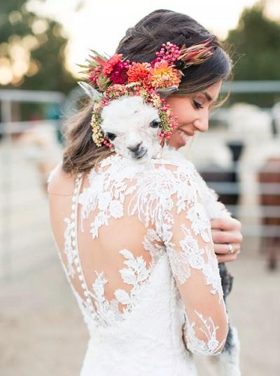 Bruid met baby alpaca