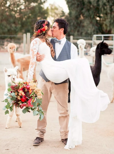 Bruidspaar tussen alpaca´s