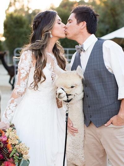 Alpaca´s op jullie bruiloft