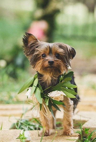 Bruiloft honden