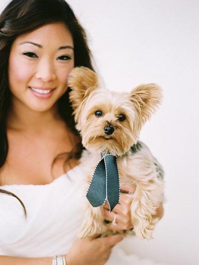 Bruiloft hond met stropdas