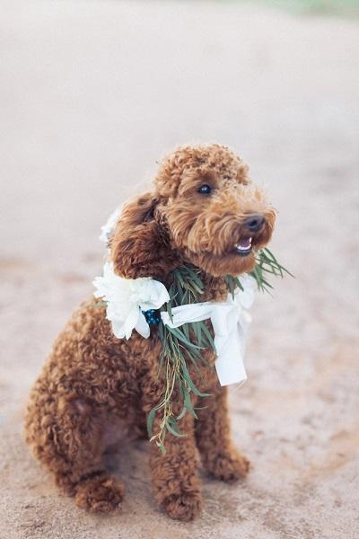Bruiloft hond op het strand